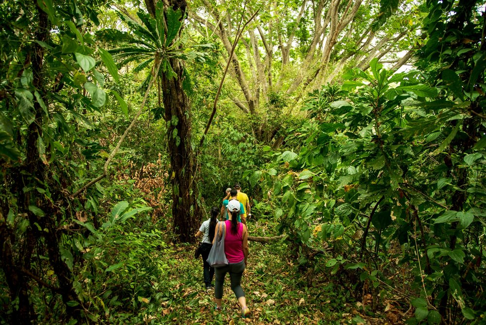 Isla Palenque-Island Hike.jpg