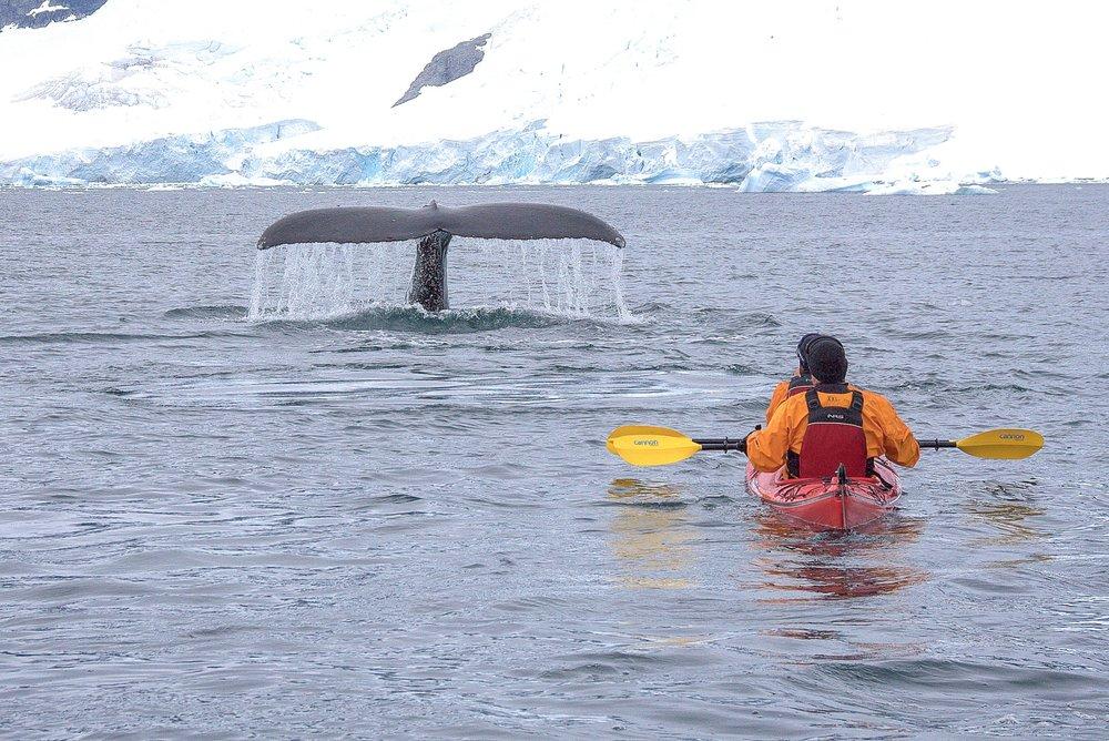 A night in Antarctica (31 of 33).jpg