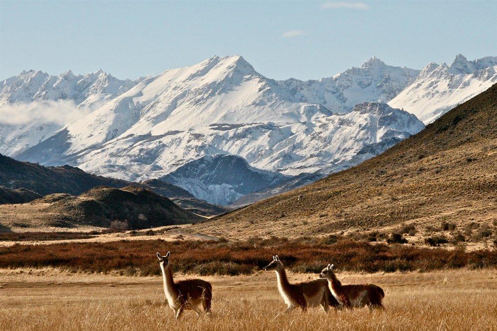 Patagonia Park.jpg
