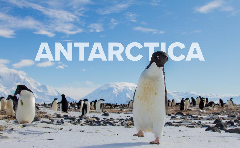 penguin - 2.jpg