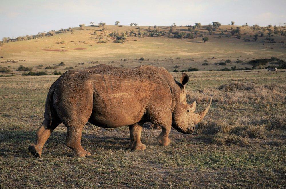 rhino-2-2048x1356.jpg