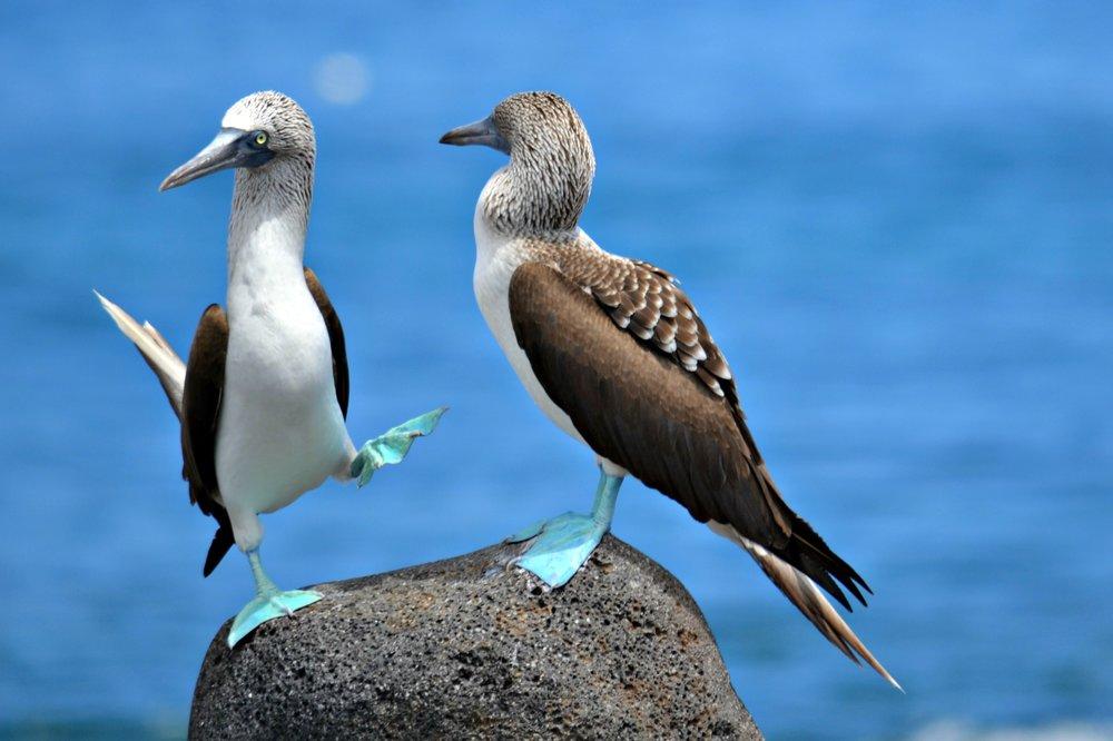 islas-de-galapagos-2-265-1.jpg