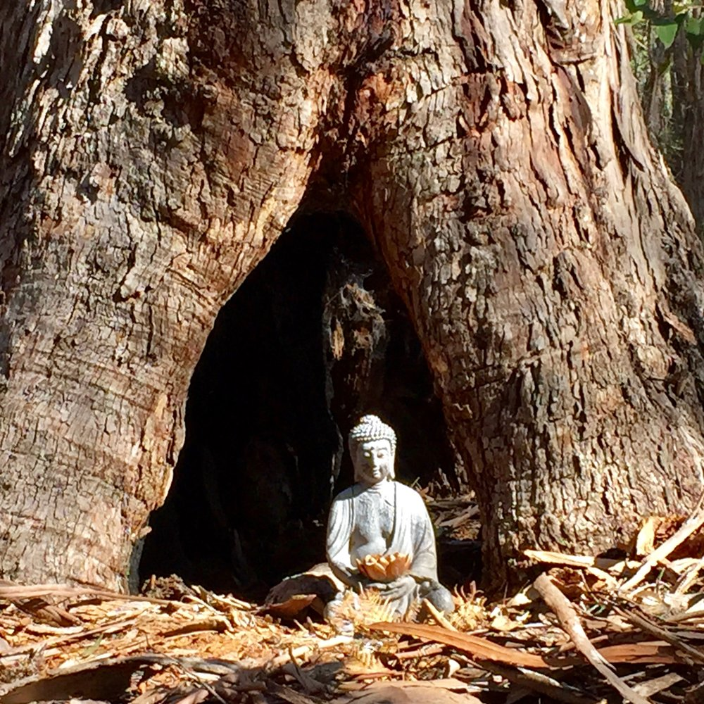 Buddha of an ancient giant stringybark.