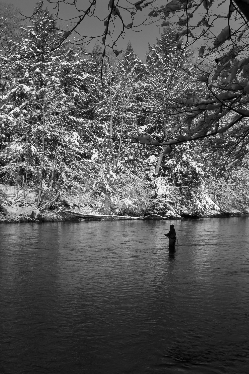 Hunter Mari  Salmon River NY