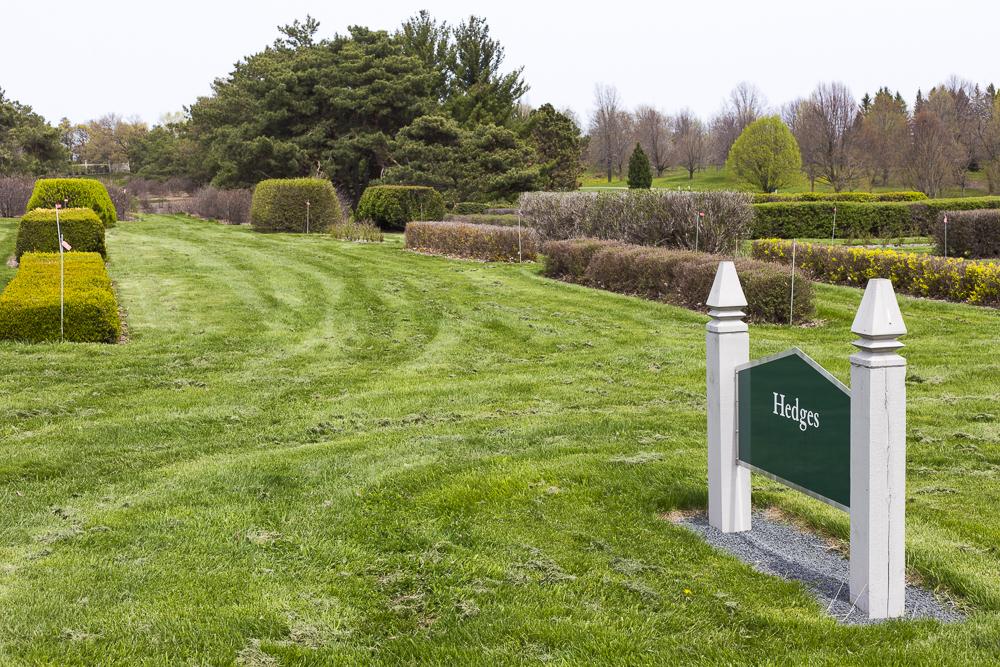 Hedges at the Minnesota Arboretum