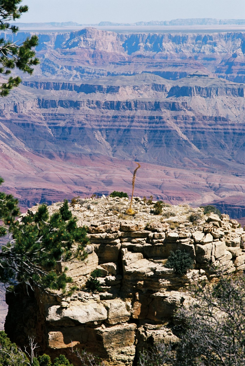 A lone, retired bloom at the Grand Canyon