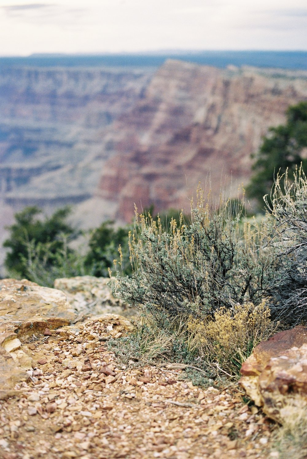 New growth along the southern rim of the Grand Canyon