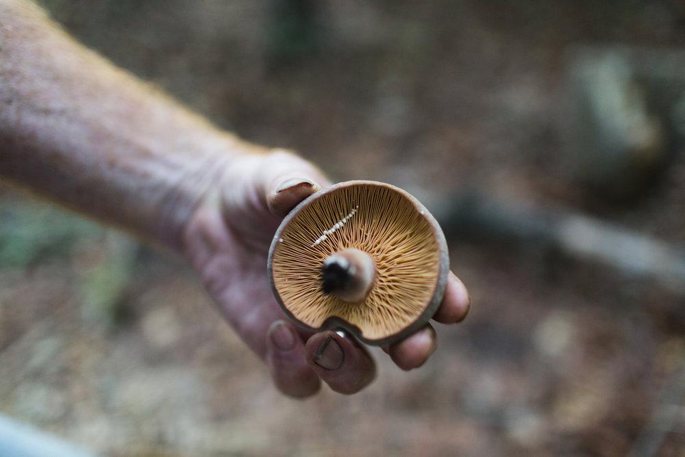 SG6-Mushroom-Farm-Olivia-Siegel-11.jpg