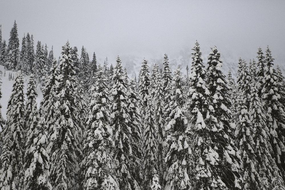a-bird-of-passage-snowy-trees