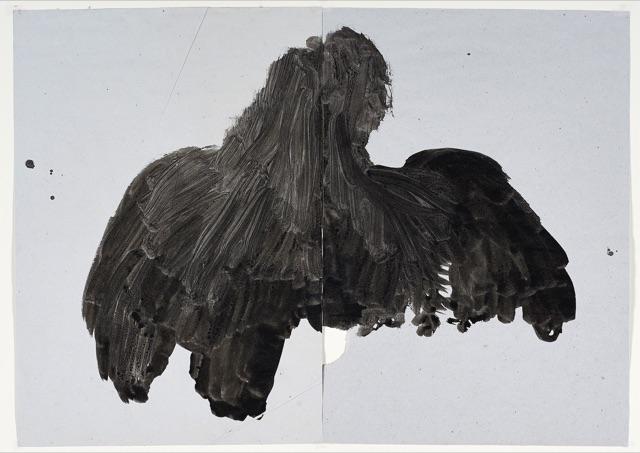 Ombra (ocell)