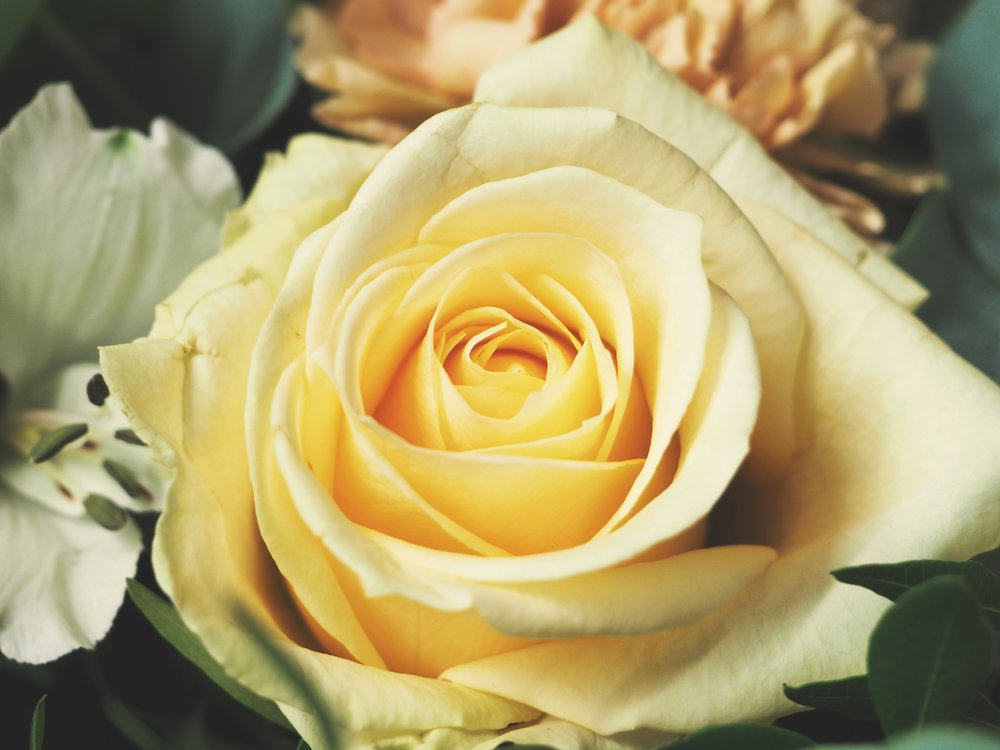 Yellow Roses - If you're after a gift for a friend, opt for jubilant yellow roses, which symbolise friendship and joy.