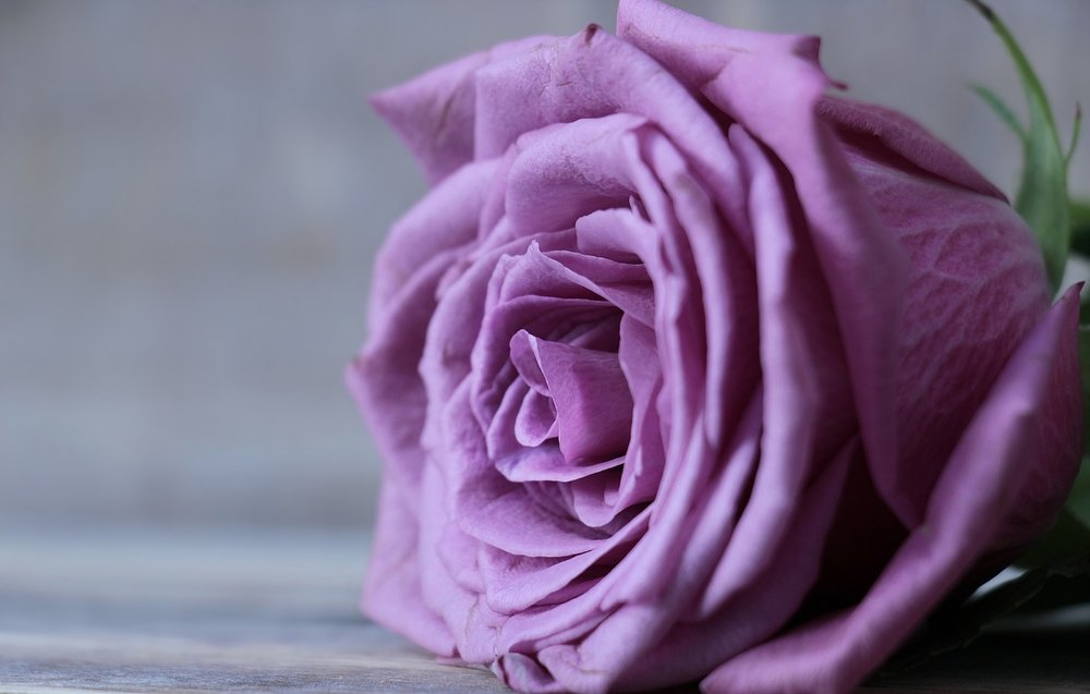 Purple Roses - Looking for something a little unconventional? Purple (lavender or lilac) roses exude an air of wonder and mysticism, but also represent love at first sight and enchantment.