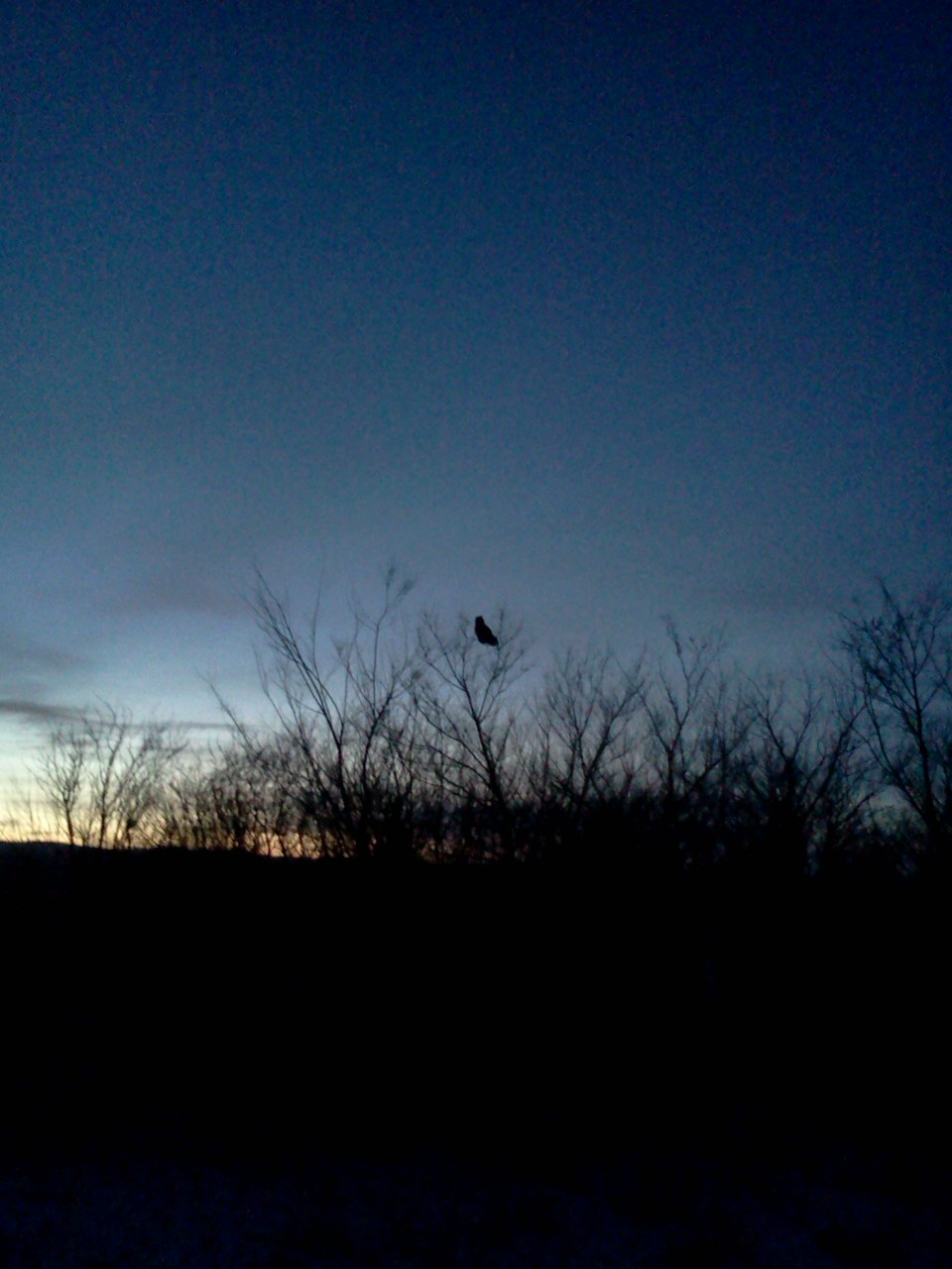 And my evening view! I've seen like 30 owls this week and this is the best picture I've managed to get.