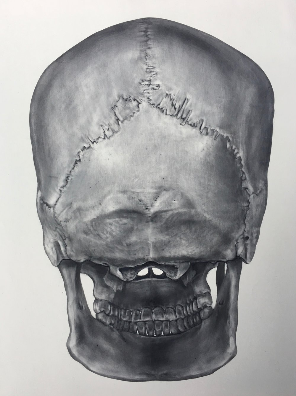 "Skull Drawings  Carbon Dust on claybord 10""x12"""