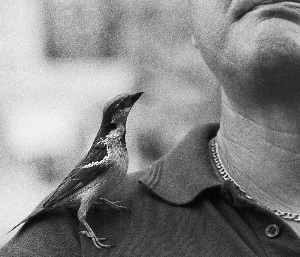 CU 2 birdsx.jpg
