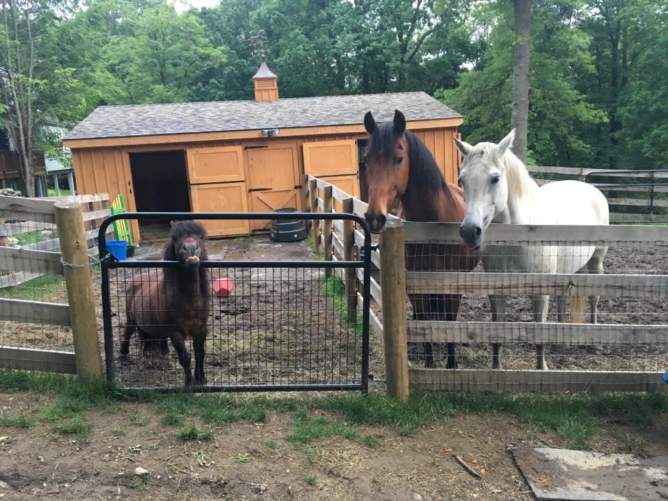 all 3 horses.jpg
