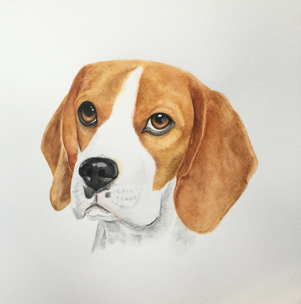 high res 2 beagle.jpg