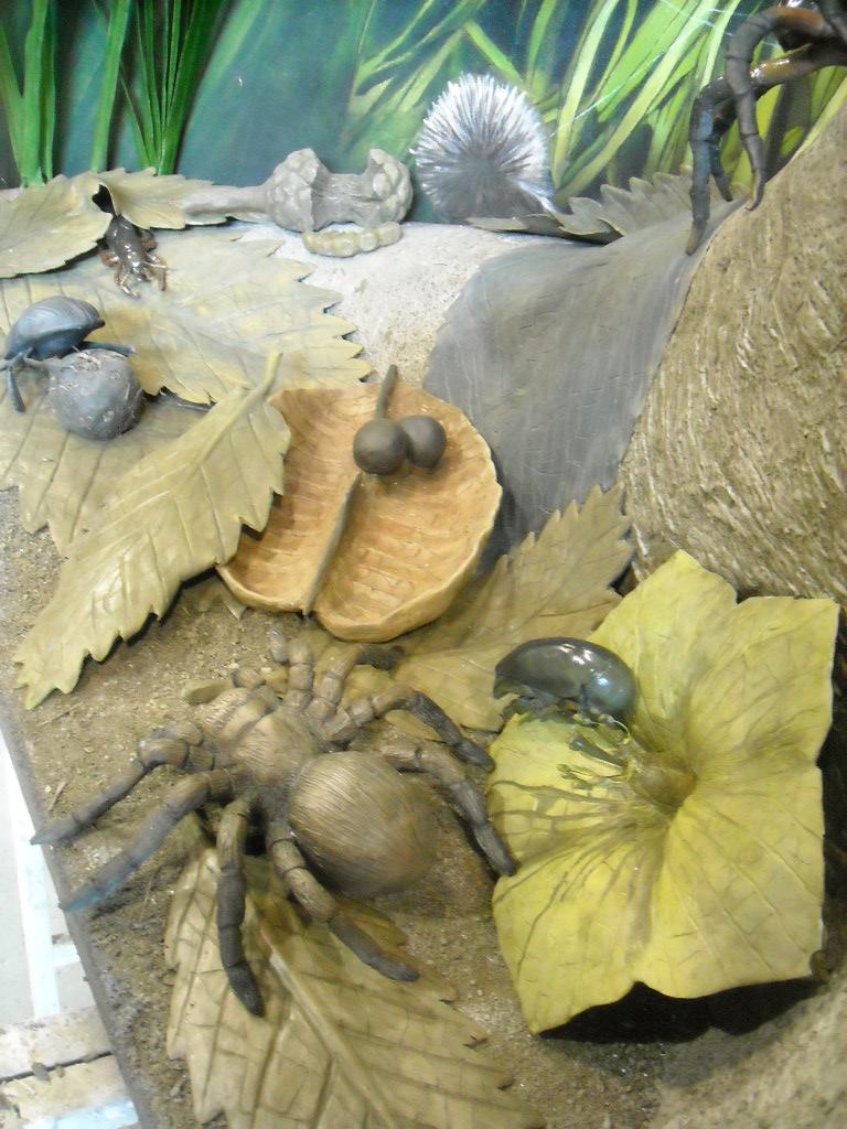 w.pg.natural history.florrisant bugs.JPG