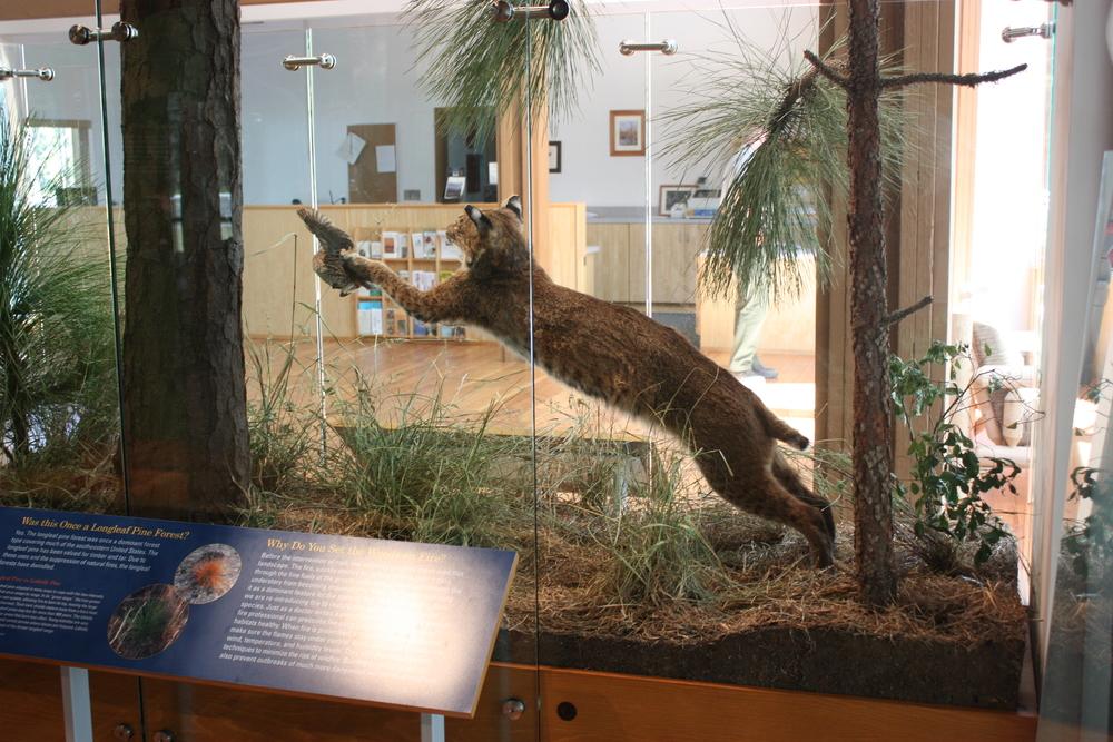 w.pg.natural history.lynx.jpg