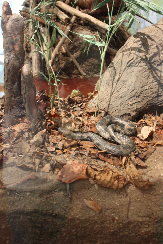 w.pg.natural history.snake swamp.jpg
