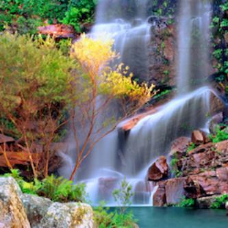tropical oasis 250.jpg