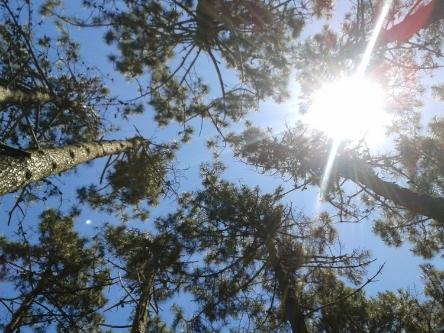 """""""SUN IN PINE FOREST"""" TAKEN BY WISE OWL ADRIEL IN URUGUAY"""