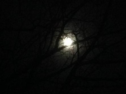 """""""MOON COCOON"""" TAKEN BY WISE OWL HK LAST NIGHT"""