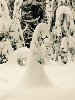 """SNOW SWAN IN PRAYER"" FROM WISE OWL KRISTINA IN OREGON"