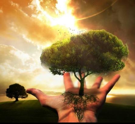 Tree-in-Hand.jpg