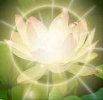 petalss.jpg