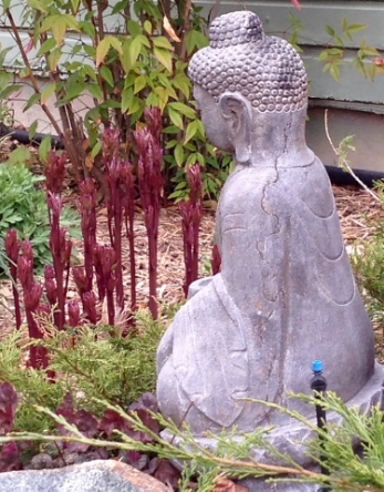 """BUDDHA WATCHING PEONIES GROW"" FROM WISE OWL NESLIN"