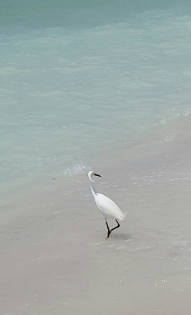 """SNOWY EGRET IN THE SURF"" FROM WISE OWL BRENDA"""