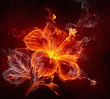 Firelotusnotverywellsizedforwallpapersbuti_47159d_4477151-1.jpg