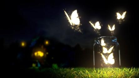 528305-beautiful-butterflies-butterflies-fly-glowing-grass-jars-light-night-shine.jpg