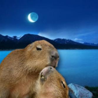 badgermoon.jpg
