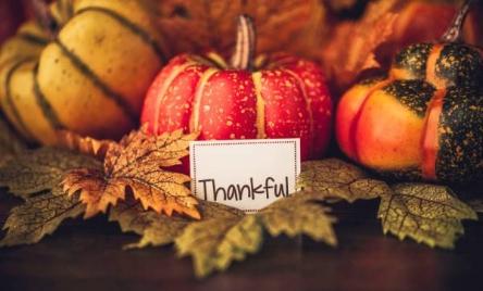 Thanksgiving_600_363_70_c1_center_center_0_0_1.jpg