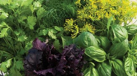 herb-growers-library-header.jpg