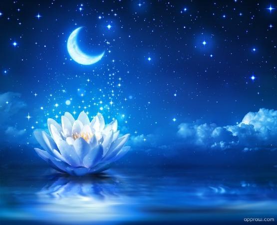 p-magical-water-lily-1ndlER5ZQD-1.jpg