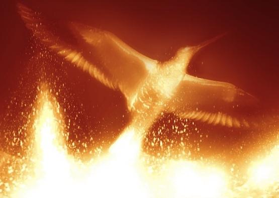 bigstock-Phoenix-56031092.jpg
