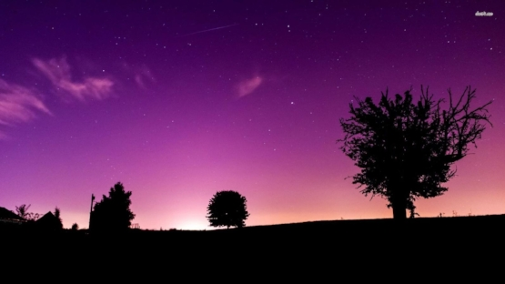 22459-tree-silhouettes-in-the-violet-night-1920x1080-digital-art-wallpaper.jpg