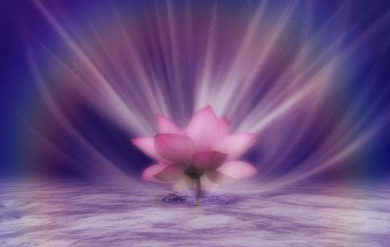Pink_Lotus_Rainbow_by_Tigers_stock1.jpg