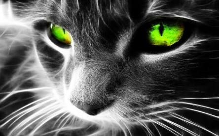 green-eyes-cat-36038.jpg