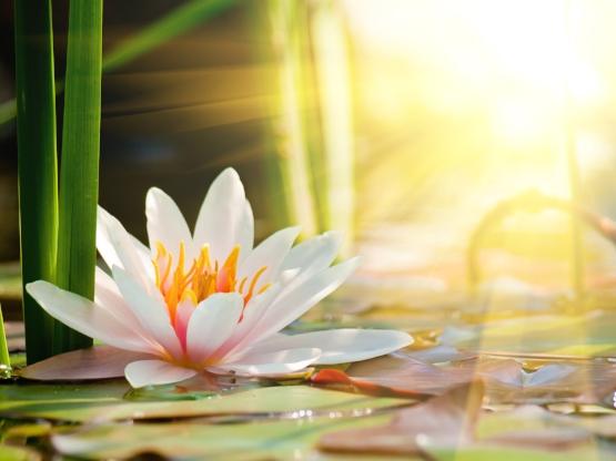 7578_Lily-flower-in-the-sunshine-HD-wallpaper.jpg