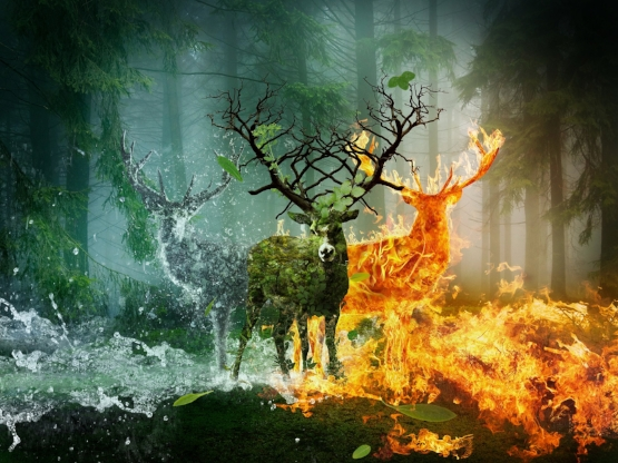 Deer_Fire_Water_480996.jpg