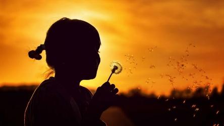 make-a-wish-flower-girl-800x450.jpg