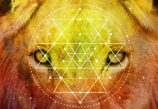 lion-beauty2.png