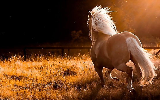 name-nature-running-wild-horses-widescreen_544388.jpg