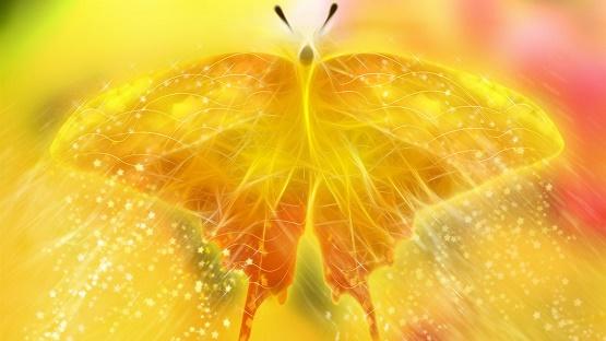 Beautiful-golden-light-butterfly_1600x900.jpg