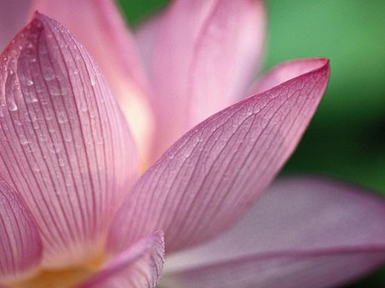 song-river-dharma-ashram-yoga-meditation.jpg