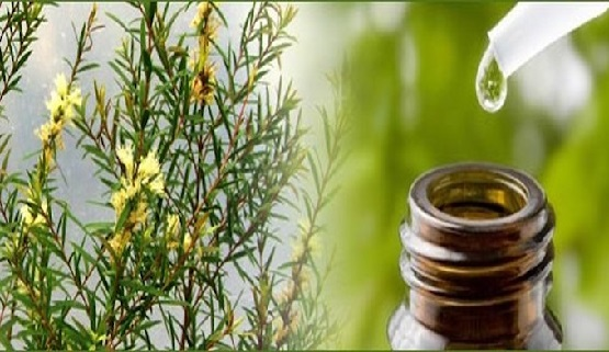 Tea-Tree-Oil-Benefits.jpg
